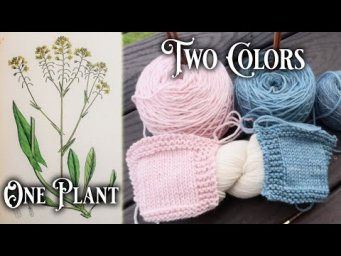 How to (accidentally) dye yarn two colors with one natural plant dye